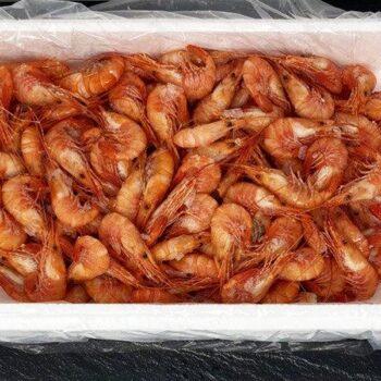 Camarón cocido gordo gallego marisco tienda online